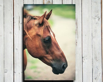 Chestnut Looking - Horse art - Animal photography - Horse photography - Chestnut horse - Red horse - Red and green