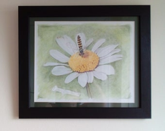 Daisy and insect pencil framed artwork