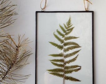 Pressed fern Frame (ready to ship), Pressed plants suspended between glass, Double Sided Glass Frame, Gift for nature lovers