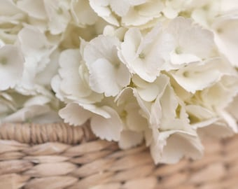 Country chic decor, large white hydrangea photography, neutral tan ivory country cottage art, bedroom decor, bathroom picture, country charm