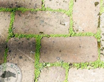 Abstract Photography | NOLA Sidewalk | Digital Download