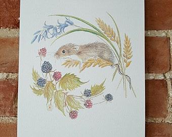 Harvest mouse A4 print. Harvest mouse drawing. Mouse art print. Mouse print. Harvest mouse art work. Woodland animal print. Animal print.
