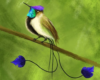 Marvelous Spatuletail, Hummingbird