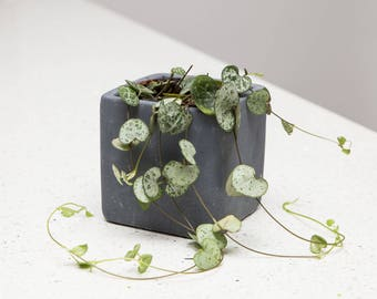 Charcoal Concrete Plant Pot with String of Hearts Plant