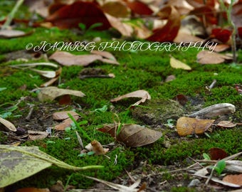 8x10 Print of Fall Leaves On Moss