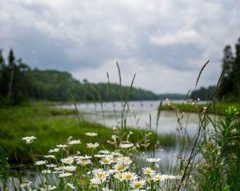 Boundary Waters, River Landscape, Wildflower Photo, BWCA Print, Minnesota Art, Midwest Photography, Northwoods, Mudrow Lake, Nature Print