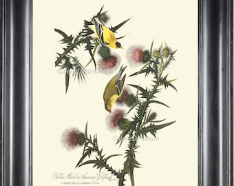 AUDUBON BIRD PRINT 8X10 Art 1 American Goldfinch Antique Beautiful Flowers Wildflower Nature Home Wall Decoration Interior Design to Frame