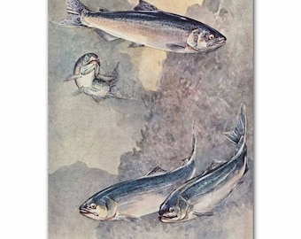 "Fly Fishing Gifts, 1930s Salmon Fish Art, Vintage Rustic Fishing Decor --- ""Chinook & Silver Salmon"" No. 284"
