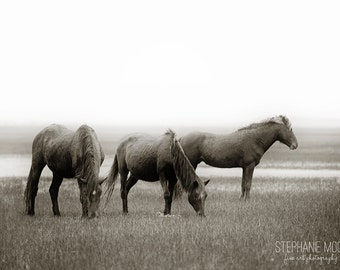 Wild Horse Photography, Wild Horse on Carrot Island playing, Black and white horse photography, Horse Poster, Horse Picture, Horse Art