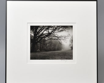 Signed Original Silver Gelatin Print Photograph. 'Tree in Fog', Connecticut. by Michael Schley. Framed