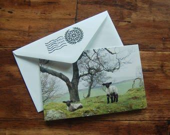 Lambs of Celtic Lands - 5x7 Notecard & Envelope