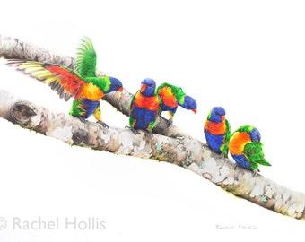Bird Art - Rainbow Lorikeet Print 8x12 - Parrot Art - Australian Bird Art - Australian Wildlife Art