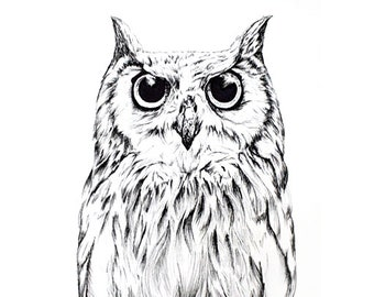 Owl  Illustration (original, hand drawn) Drawing
