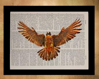 Falcon Dictionary Art Print Hawk Poster Bird Print Wall Art Home Decor Gift Ideas Peregrine da1303