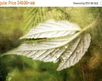 20 Percent Off Sale still life photography nature green leaf fine art photography home decor office decor