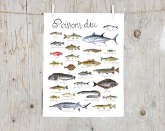 Print Fishes of Québec | Watercolor fish painting | Art mural Nature Print | Poster identification classification Fish | Gift