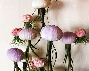 SIX Assorted Hanging Jellyfish Air Plants - Wedding Gift - Birthday Gift - Airplants