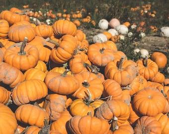 Small Autumn Pumpkin Patch Pile photography