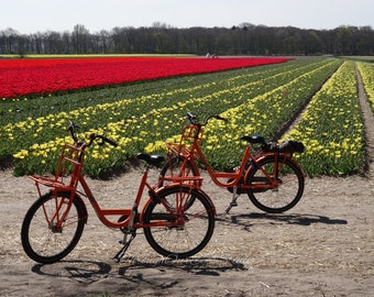 Tulip Field Bicycles