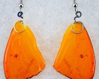 Real Butterfly Earrings - Sulphur - Hand Cast Resin