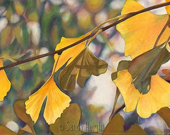 Matted Giclee Print of Original Watercolor Painting, art, archival, gingko tree, leaves, autumn, fall, yellow, wall art, home decor,unframed