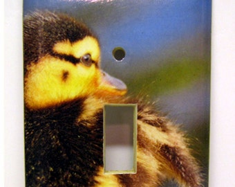 Downy Duckling -- Recycled Single Switch Plate Cover, Photo, Bird, Mallard, Yellow, Blue, Green, Fuzzy, Baby, Spring