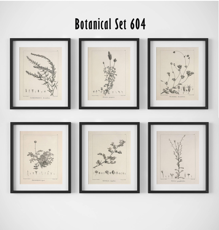 Botanical Print Set Of 6 Botanical Wall Art Floral Print