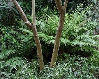 Ferns in Garden Photo, 5x7 Photo, 8x10 Photo, Variegated Plants, Tree Photo, Botanical Photo, Garden Photo