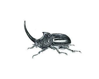 Printable Rhinoceros Beetle, digital download, hand drawn, pen and ink, print up to A2