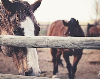 Horse Sense, horses, ranch photo, fine art print, wall art, photo, photograph
