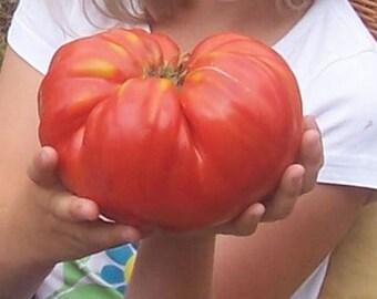Bulgarian Heirloom Seeds, Big Beef Tomatoe seeds