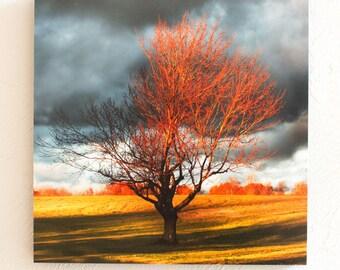 Season of Shaw Tree Fall- 10x10 Standout