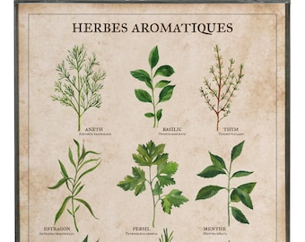Art Print - Poster - Botanical drawing - Drawing - Herbes aromatiques