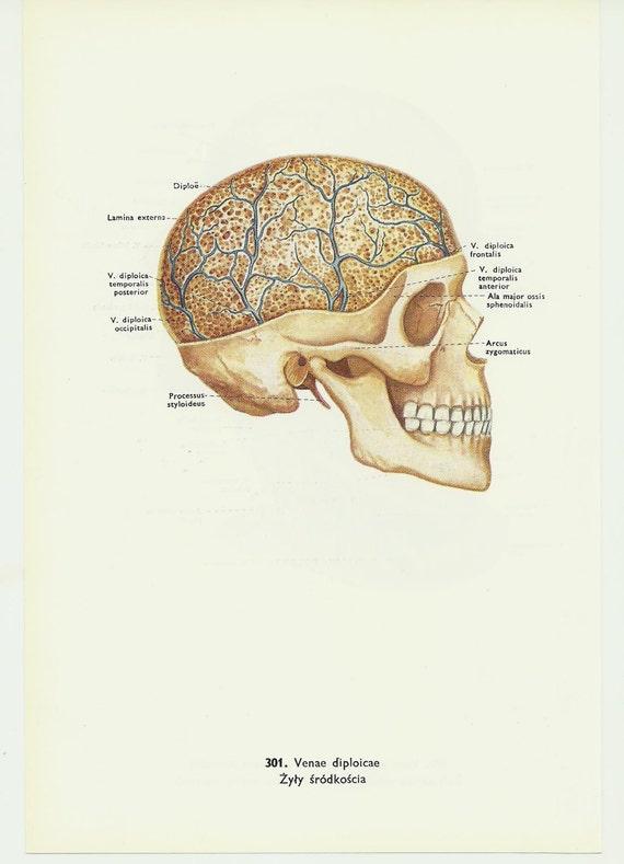 María cabeza de cráneo anatomía médica doctor sangre cuerpo