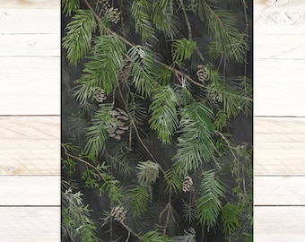 Black Pine - Quartz Collection / Watercolor botanical wall hanging, wood trim art. Scientific Canvas Posters Chart More Options