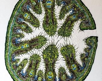 Marram Grass (Ammophila)  Giclée Print