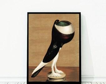 Pigeon Vintage Style Large Art Print Bird Brown Green White