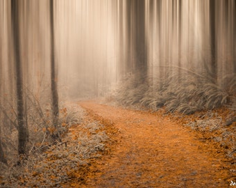 Path Through the Misty Woods
