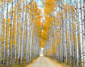Wyoming Art, Aspen Alley in Southern Wyoming