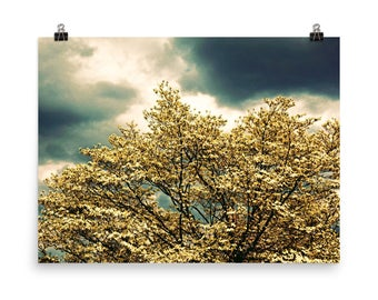 Nature Photography / Fine Art Photography / Color Print / Dogwood Tree / Sky