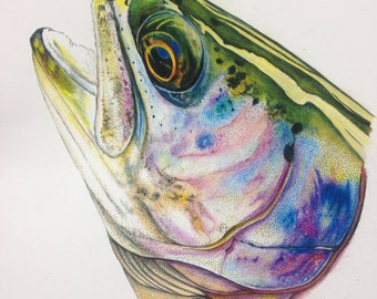SMALL 8 1/2 x 11 Rainbow Trout  limited edition print