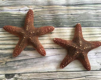 Large Beach Starfish Wall Decor, Starfish Wall Hangings, Starfish Home Decor, Hanging Starfish, Starfish Wall decor, Beach Home Decor, 2pc