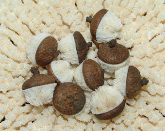 Mushroom Coral Acorns- Natural Caps with Little Button Vintage Corals