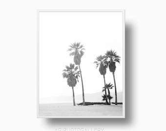 Coastal Palm Tree Print, Venice Beach Printable Download, Black and White Beach Palm Tree photo, California Beach Palm Tree
