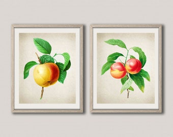 Apple Botanical Print Fruit Botanical Fruit Print Peach Wall Art Peach Botanical Poster Fruit Poster Kitchen Decor Kitchen Art WBOT29-WBOT32