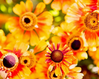 "Chaos reigns - 8x10"" fine art flower photography print"