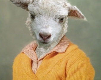 Shay Sheep, School Portrait - 8 X 10 Art Print