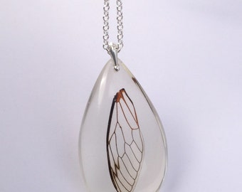 Circada wing (died of natural causes -homicide by bird) eco-resin drop pendant on silver chain.