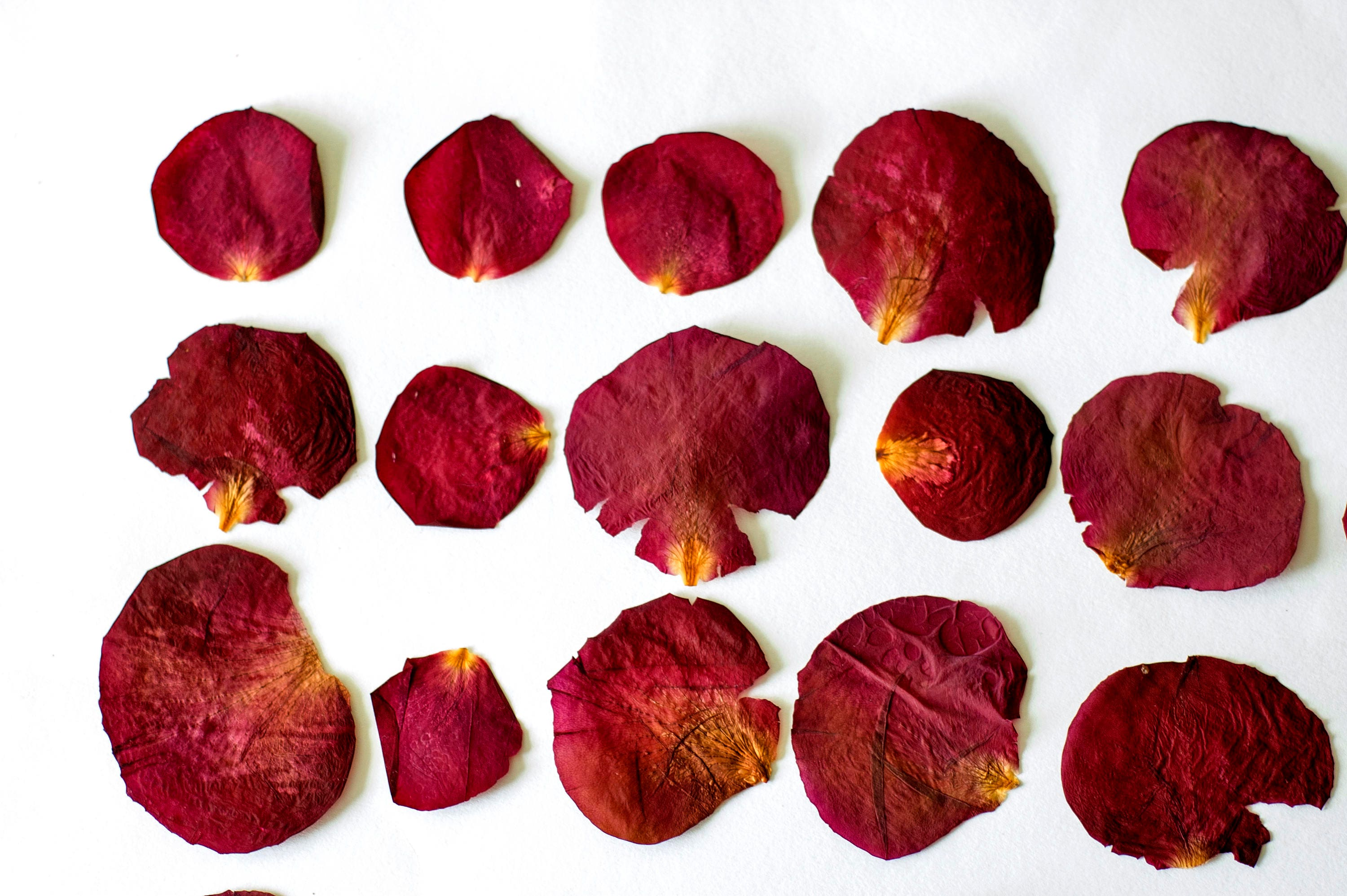 35 dried pressed rose petals. Red Dried Pressed Flowers for Crafting ...