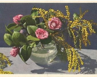 Vintage Unused Postcard, ca. 1940, Camellia Japonica - Kamelie by Thor E. Gyger, Adelboden, Switzerland #3155